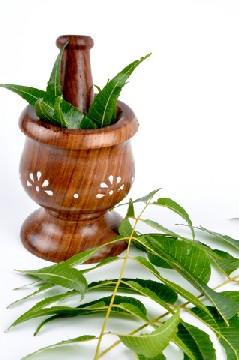 Three Essential Ayurvedic Herbs